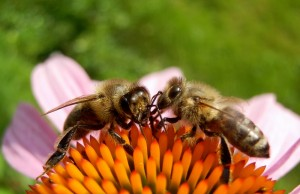Beehive Demonstration, 19 July, Trunch Open Gardens