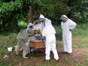 a.-Glebe-1.1-hive